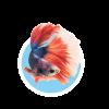 Для рыбок