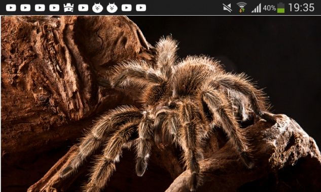 Par zirnekli